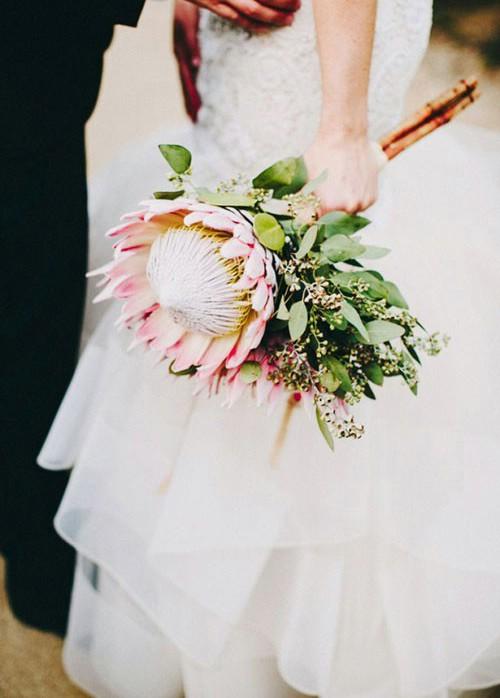 پروتاسه گیاهی کمتر شناخته شده اما بسیار زیبا برای گل دست عروس