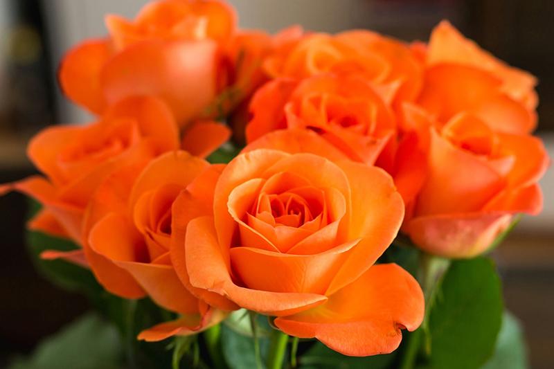 رز نارنجی نماد چیست؟