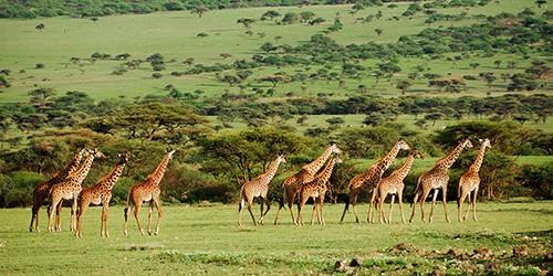 ماه عسل در شکارگاه - پارک ملی تانزانیا یک میراث جهانی است