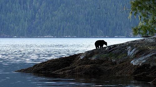کانادا معدن تنوع جانوری است و شکاردوستان از سراسر دنیا برای شکار در فصل های مختلف وسوسه می کند
